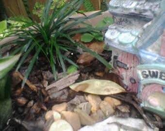 Dwarf Mondo/Monkey (6) pips grass plants for terrariums, fairy gardens, mini gardens,boarders stays small