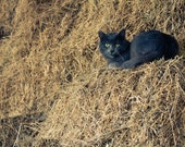 Black Cat Photography, Animal Photograph, Barn Haystack Print, Spooky Halloween, Fine Art Photography Print, Wall Decor Art, Home Decor