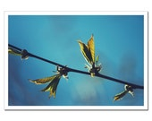 Fine Art Photography, Nature Photography, Leaves Cherry Tree Photo Print, Botanical Branch Photo, Light Teal Blue and Green 8x12 or 8x10 - stoevvalentin