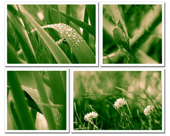 Green Summer, Fine art photography prints, Set of four prints 6x4 and 4x4, Rain forest leaves, bamboo, grass lawn and daisies