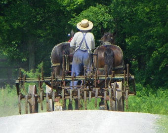 Amish Farmer Print / Amish Farmer Picture / Photo Card / Free US Shipping
