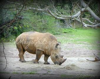Rhino Print / African Preserve / Disney World / Rhino Picture / Free US Shipping / MVMayoPhotography