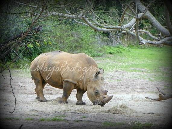 Rhino Print / African Preserve / Disney World / Rhino Picture / Free US Shipping