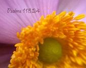BIble verse photo Psalms 118:24