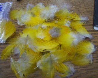 """Naturally Shed - Lot of 100 Yellow Macaw 1"""" to 2"""" Body Feathers"""
