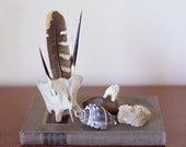 Natural History Collection, Number 003. Feather, Quills, Bone, Fossil, Seashell, Calcite.