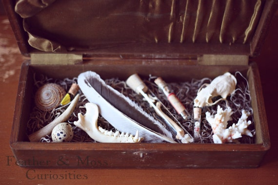 "20% off: ""Rosemary"" cabinet of curiosities.  Feather, bones, quail egg, mink skull, jawbone."
