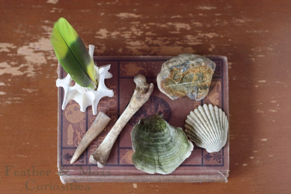 Natural History Collection, Number 002.  Antler tip, bone, seashell, fossil, feather, mushroom.