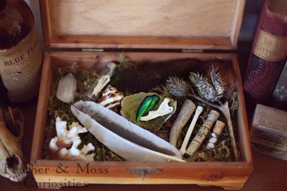 "Cabinet of Curiosities. ""Fairuza."" Curiosity Cabinet. Vintage Wooden Box. Bones, Feather, Minerals,  Vintage Vials"