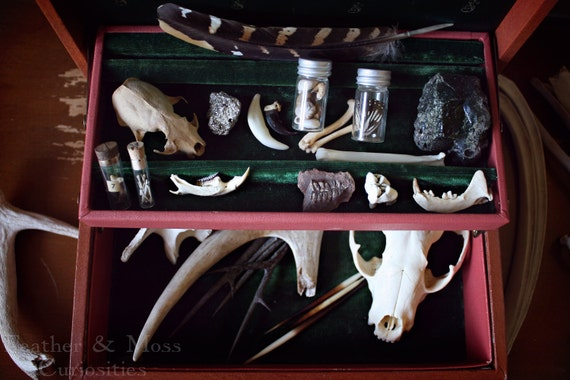 "30% off: ""The Huntsman"" cabinet of curiosities. Feather, antler, claws, bones, fossil, pyrite, quills."