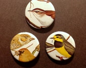 Bird Pinback Buttons - Set of 3