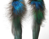 Iridescent Rooster & Peacock Plumage feather earrings w/ black chain - aqua, blue, bronze, green