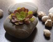 beach stone flower planter - simple design - hand cut