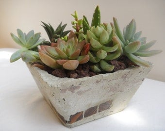 Potted succulent garden in hand crafted garden planter.