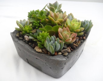 Unique Succulent Garden in grey cement planter