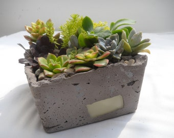 Grey cement planter topped with colorful succulent garden