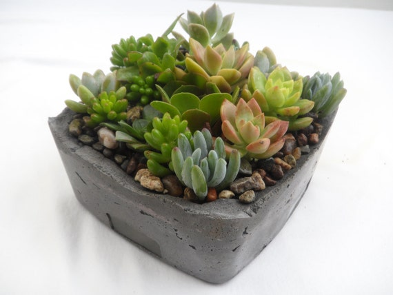 Unique Succulent Garden In Grey Cement Planter