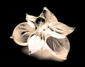 "Original 6x6 photograph Fine giclee print home decor ""Sepia Black White Flower Negative"" Limited Edition by Anne Londez  SRA"