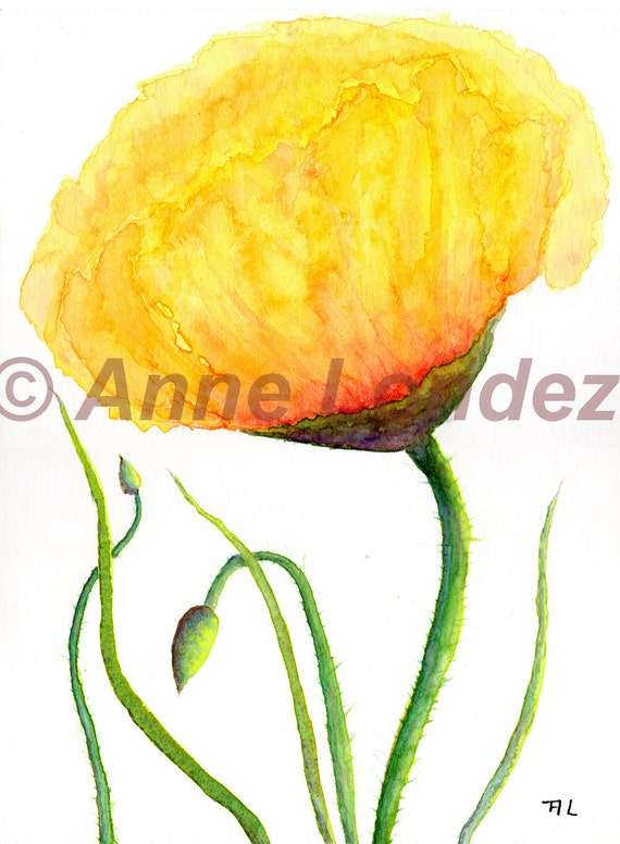 8x11 Fine giclee print  yellow poppy watercolor French country decor botanical art Anne Londez  SRA OOAK