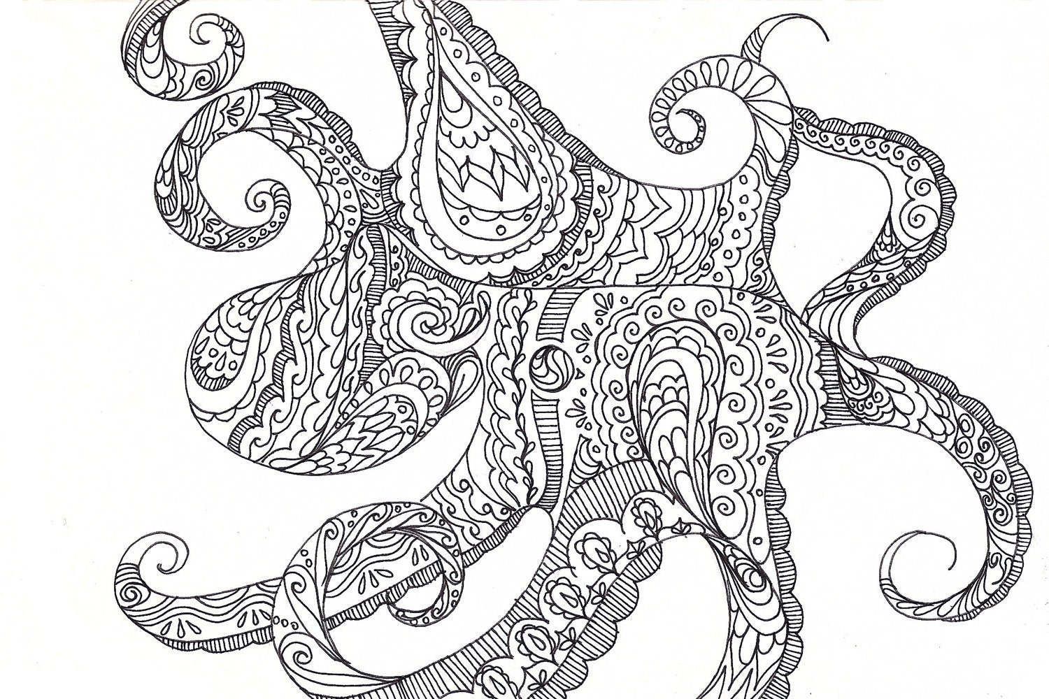 Uncategorized Drawing Of An Octopus octopus drawing a suitable cephalopod fine art giclee