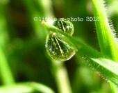 SALE Fine Art Macro Photography 5x7 -Clarity- Morning Dewdrops