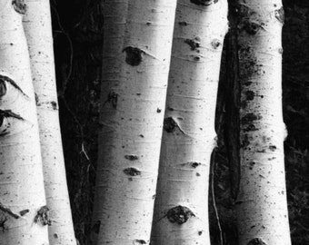 Photographs, Lassen National Park, Northern California, Fine Art Print