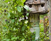 High Rise Rustic Birdhouse Condo - Fine Art Photography