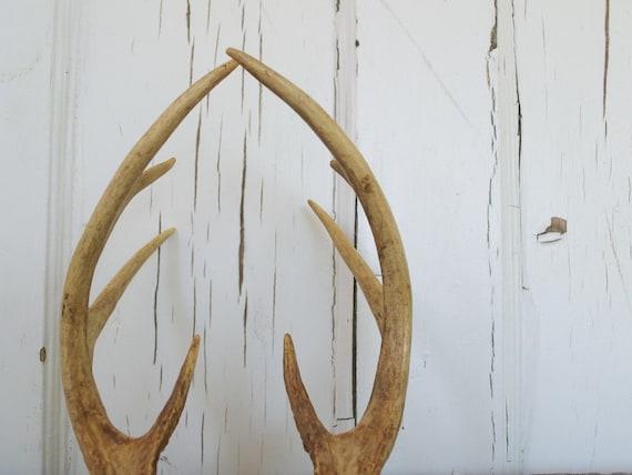 Beautiful Vintage White Tailed Deer Antler Rack