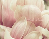 Soft. Blooms Photo. Pink Photo. Magnolia Tree Photograph. Macro Flower Photography. Pink. Nature. Soft. Home Decor. Fine Art Photography
