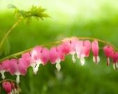 Bleeding Heart Photograph Photo  Macro Photography. Home Decor. Wall Art. Flower Photography.  Pink. Fine Art Nature Photography