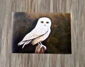 Snow Owl/Print