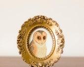 Vintage Framed Bird - Barn Owl in Ornate Gold Frame
