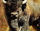 RUSTIC BUFFALO - buffalo, animal, wildlife, rustic, grunge, Home Decor, office decor, painting
