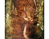 BULL ELK - Elk,  animal, wildlife, rustic, grunge, home decor, office decor