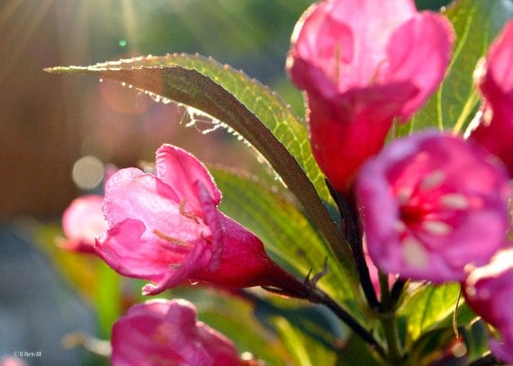 Trio of Flowers - flower photography, garden photography, nature photography