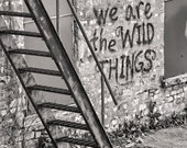 The Hespeler Wilds Fine Art Print      Shot in Cambridge Ontario graffiti stairs wild things Size : 11x 14 inches black and white