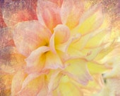 Dreamers Fine Art Print 8 x 10 inch whimsy flower nature shabby chic pink, cream , yellow petals textured