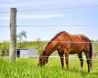 Horse Graze 8 x 12 inch Fine Art Photo country farm gentle animal eat