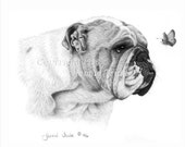 11 x 14 English Bulldog and Butterfly Art Print from Original Pencil Drawing by Jennie Truitt