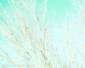 Your Going The Right Way Dreamy Beautiful White Aqua Dreamy Branches Sky Trees Fine Art Photography Original Art Print 8x10