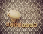 8x10 Vintage Style Letter Art Original Photography Food Mushroom Soft Color Fine Art Print Picture Artwork