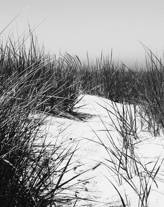 Beach Lake Photography Water Dreamy Beautiful White and Black Wild Grass Fine Art Original Print 5x7