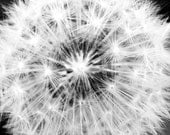 "14"" x 11"" Dandelion Photograph Print (black and white)"
