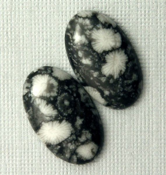 Fossilized Coral Cabochon Pair - Hand Cut Designer Freeform Gemstone Cabochons Black & White Fossilized Coral Pair