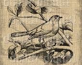 Antique Illustration, Vintage Digital Download, Iron On Transfers, Vintage Illustration, Bird Illustration