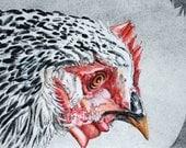 A Hen's Beak