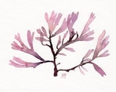 Red Seaweed - Original watercolor painting (5x7 inches)