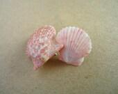 Mini Shell Earrings