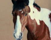 Your Horse Portrait in pastel or pencil.