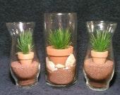 Glass Centerpiece, Wedding Centerpiece, Sand, Shells, Mini Flower Pot and Plant, Desert